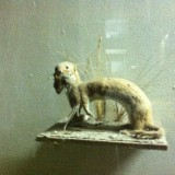 Природо научен музей - Котел