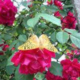 пеперудата яко позираше днес :)