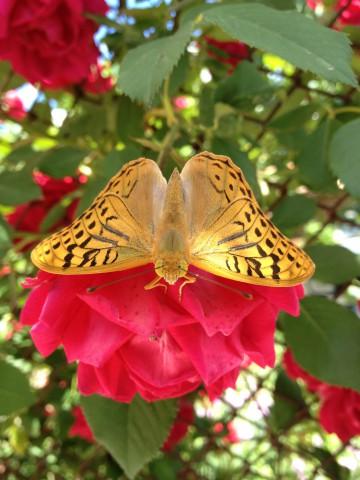 Butterfly effect :)