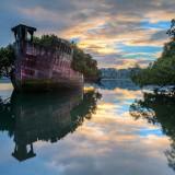102-годишен плаваща гора в Сидни, Австралия Това е корпуса на голям парен кораб, който е трябвало да бъде демонтиран в залива Хоумбуш, Австралия, след Втората световна война. Когато екипа по демонтиране приключили обаче, някои части на кораби останали там, както са си. Сега е красива и завладяваща плаваща гора, която служи за пример, затова как действа природата.