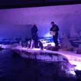 Пингвини в аквариума в Лондон