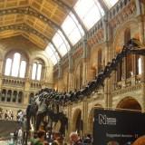 Скелет на динозавър в националния исторически музей