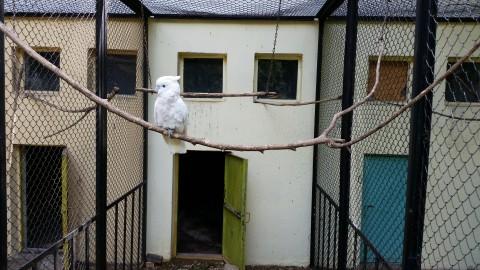 папагал в зоопарка в Ловеч